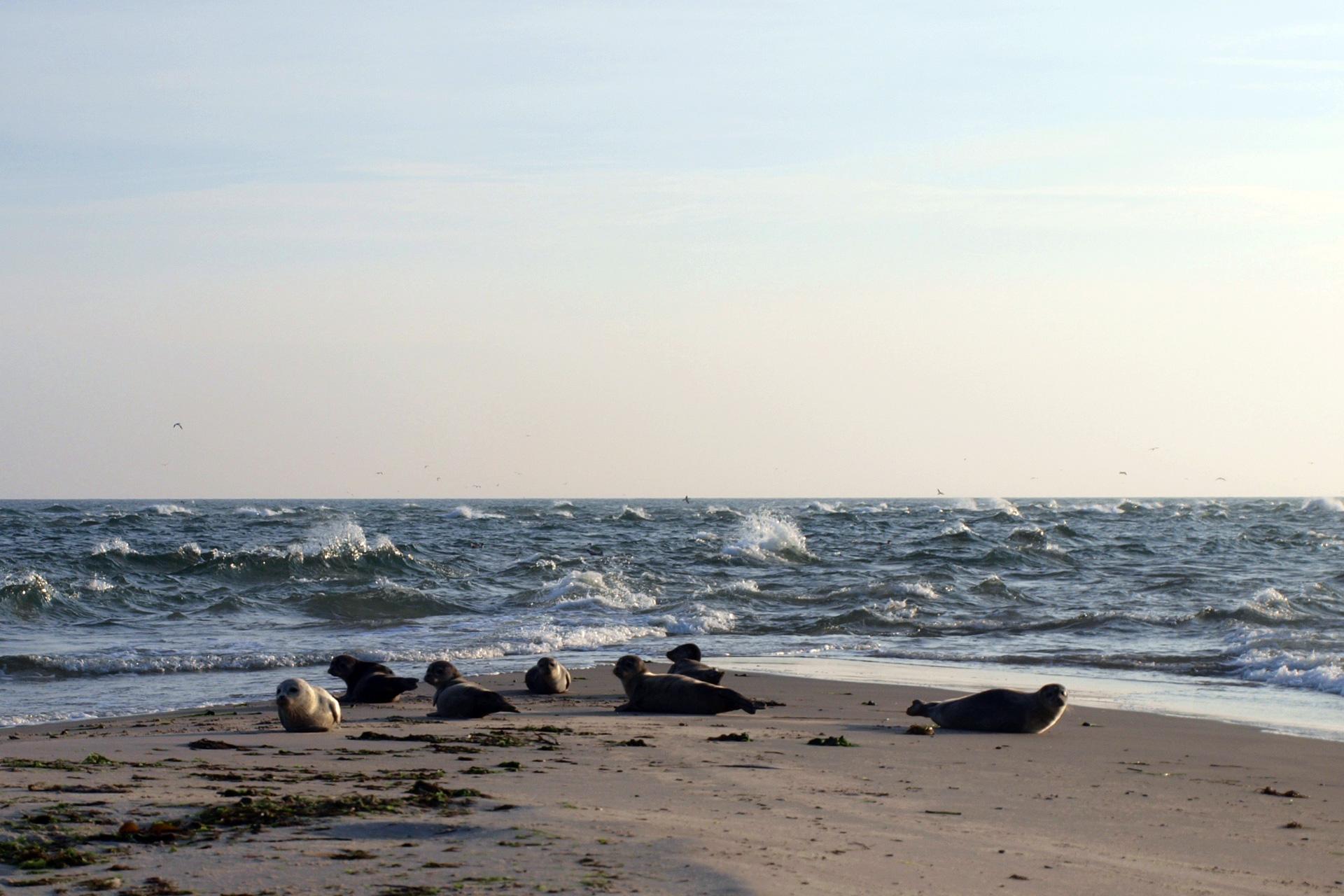 buchstabenplus in Skagen: Grenen